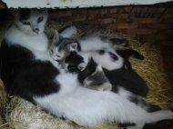 Baby katze zu verschenken